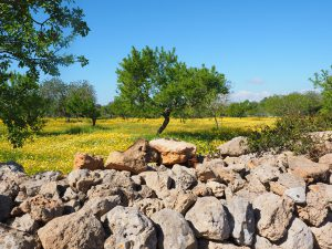 olive-tree-1090267_1280